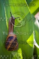 snail007.bmp