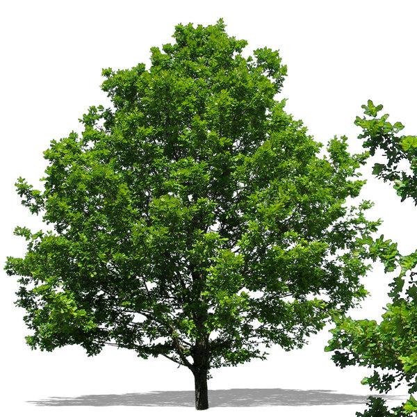tree46p.jpg