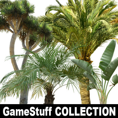 Collection_Palms_01.jpg