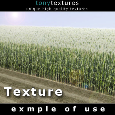 Cornfield-images-A-Texture.jpg