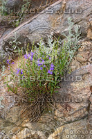 Wild Mountain Flowers