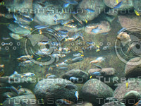 FishInAquarium_1.jpg