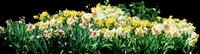 Flower-bed 1.jpg