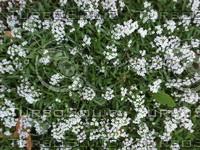 Flowers_100A.JPG