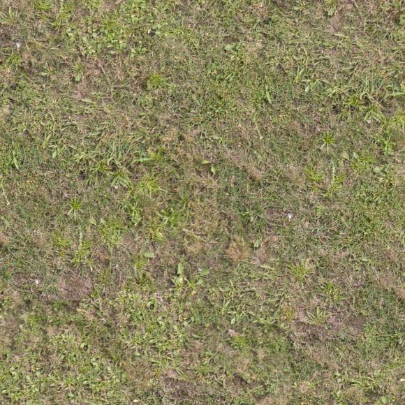 Grass018s.jpg