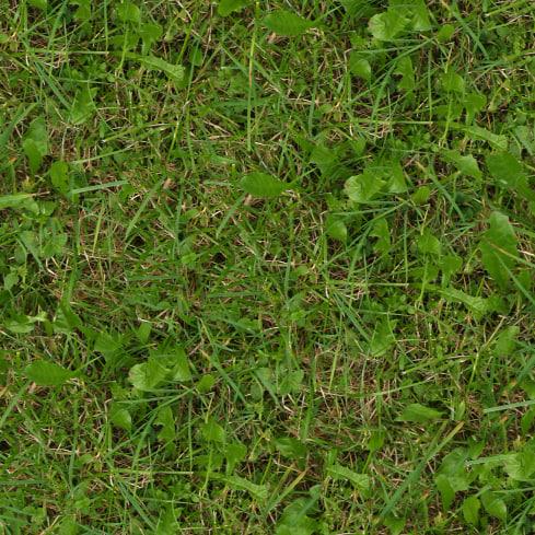 Grass027s.jpg