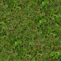 Grass027