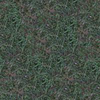 Grass036