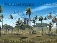 PalmTrees2.jpg