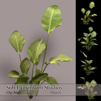 Plant_4