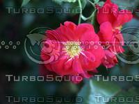 Red Flower NRDP.jpg