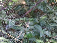 Spider on the web.JPG
