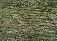 Tree bark2.jpg
