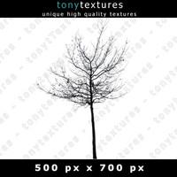 Tree Silhouette 007 - free Version