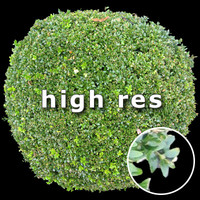 Bush 001 - top view (HighRes)
