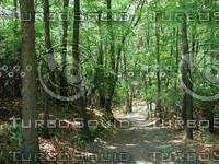 Woods_1.JPG