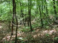 Woods_4.JPG