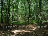 Woods_5.JPG