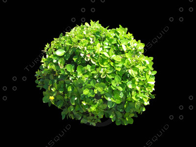 a3ds_shv1_shrub2_400.jpg