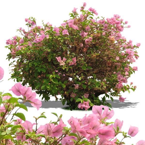 bush12p.jpg