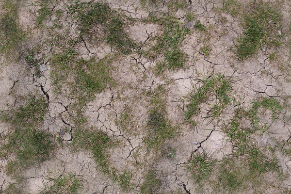 cracked grass 01.jpg