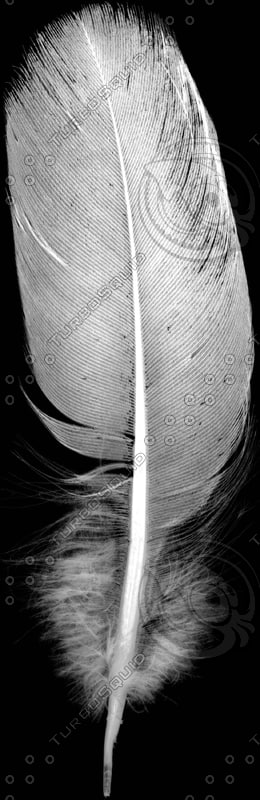 feather3.jpg