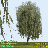 Weeping Willow High Resolution