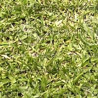 grass1_jpg_tga.zip