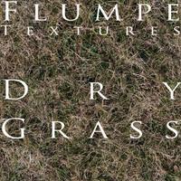Grass - Dry