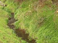 greenriver.jpg