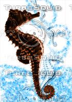 seahorse.JPG