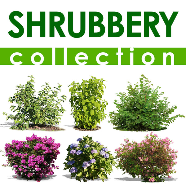 shrubbery collection.jpg