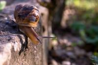 snail005.bmp