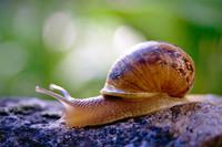 snail008.bmp