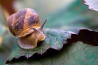 snail011.bmp