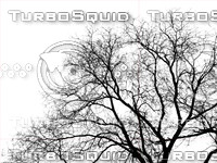 Tree 2 Silhouette Shadow map
