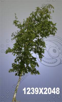 tree_3075.jpg