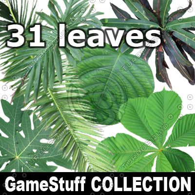Collection_Leaves.jpg