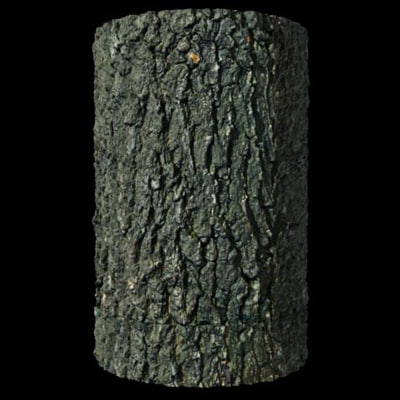 DisplaceIT_TreeBark_Oak_Render.jpg