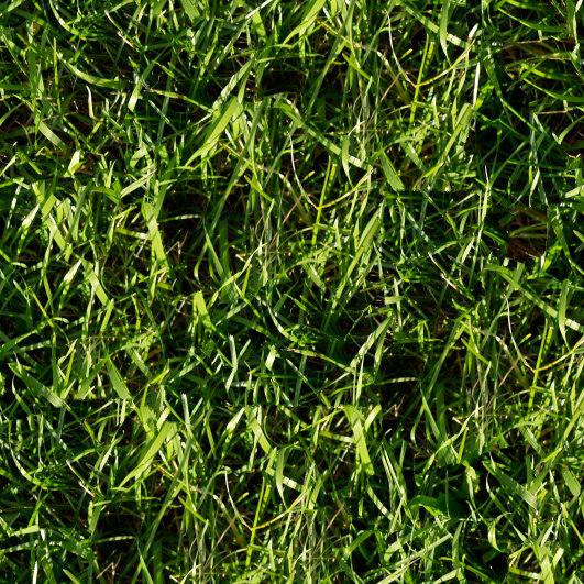 Grass005s.jpg
