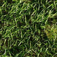 Grass006