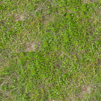 Grass008