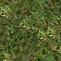 Grass009