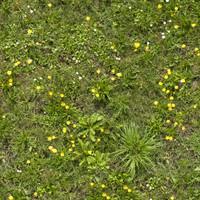 Grass015