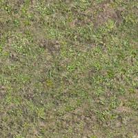 Grass017