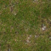Grass019