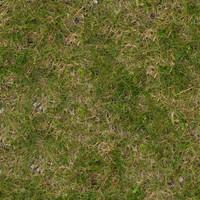 Grass020