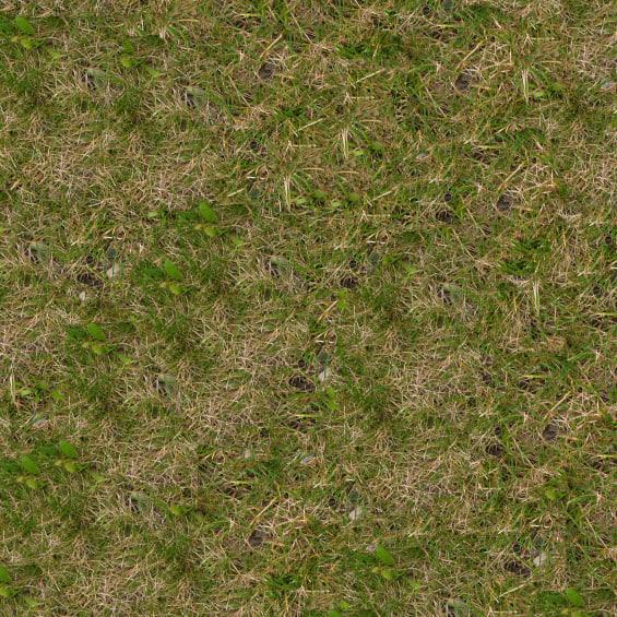 Grass021s.jpg