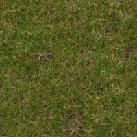 Grass022