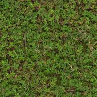 Grass024